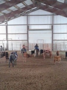 cattle clinic 11-24-13 4